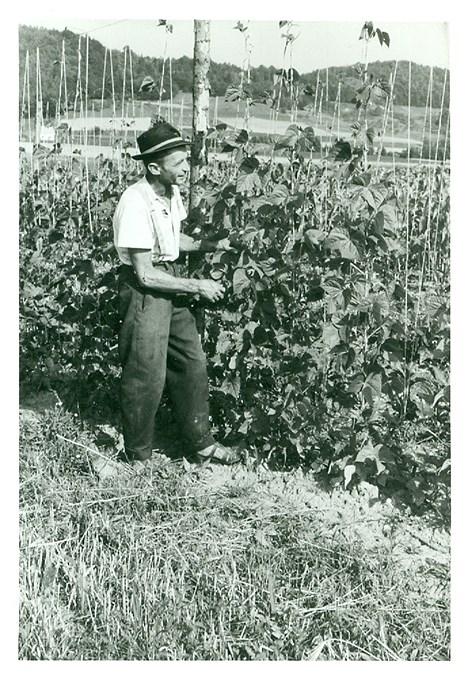 Erster Vertragsanbau bei Käferbohnen