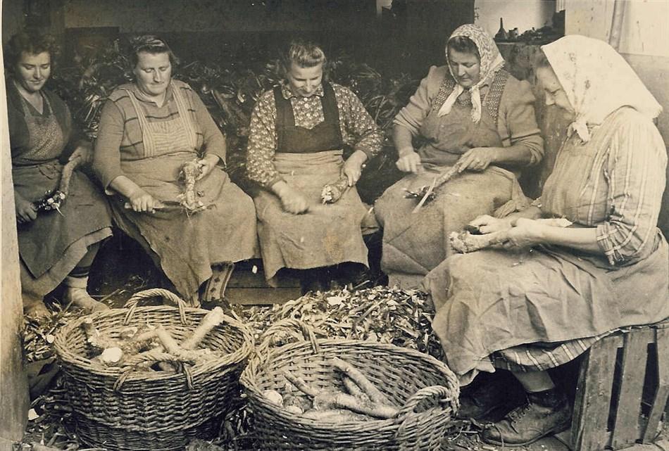 Gründung der Arbeitsgemeinschaft Steirischer Kürbisbauern;  starke Ausweitung des Krenanbaues